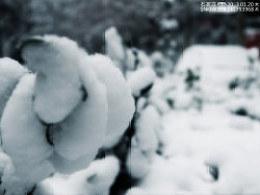 2013-01-20-石家庄-雪--1