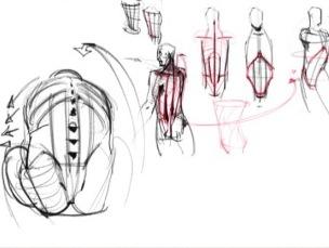 背部身体结构_艺用人体解剖结构图文教程/背部关键肌肉与骨点联系