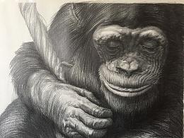 大猩猩步骤