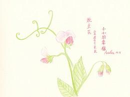 每天送自己一束花——豌豆花:小小的幸福。
