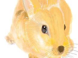 手绘(兔)