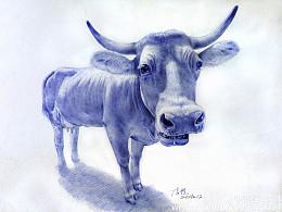 圆珠笔画牛