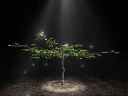 【VFX】猕猴桃树生长