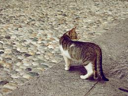 野猫也有爱