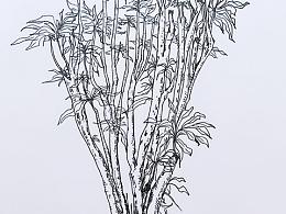 泰国普吉岛度假,就是不知道画的这个植物叫啥