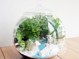 绿植手作之北极熊大瓶款--《夏末花园成长日记17》