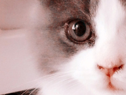 歇默斯の猫