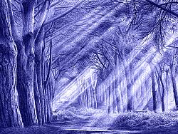 OY圆珠笔画·梦幻森林