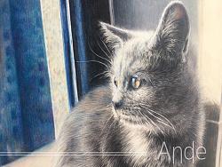 彩铅猫咪手绘作品