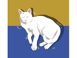 一只叫小白的猫