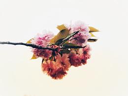 花开~「二」