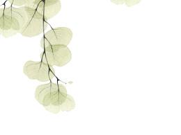 水彩半透明叶子