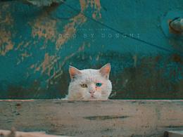 猫 系列(北京胡同)