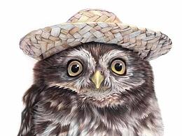 戴帽子的猫头鹰