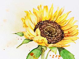 水彩花卉练笔--向日葵
