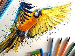 ZD水彩笔鹦鹉。