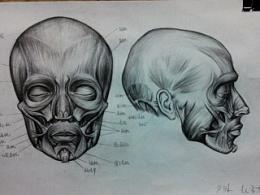 人体绘画 动态素描