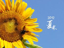 【K】2012夏末-向日葵的姿态