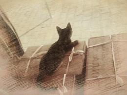 《猫的世界》