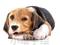 彩铅比格犬
