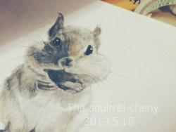 手绘松鼠-自动铅笔 彩铅点缀图片