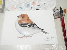 手绘水彩小鸟