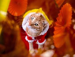 宠物摄影|新年红