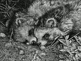 任保海钢笔画:野生动物系列《厮守》