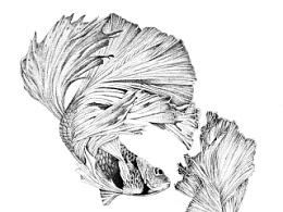 楚歌钢笔画-双鱼(点画)55*40cm