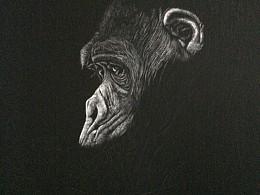 李子哥刮画《猩语猩愿》