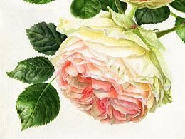 两朵玫瑰 水彩(获多福高白300G+白夜)