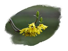 惊蛰起 春暖花开