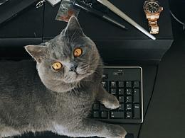 ☻每天捣乱系列☻ 就趴键盘,你能把我怎样?