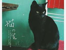 奶奶家的小黑猫。