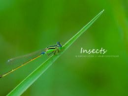 虫儿与自然