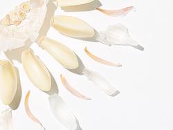 「Summer flower」· 夏花