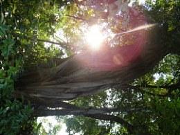广州阳光与树花