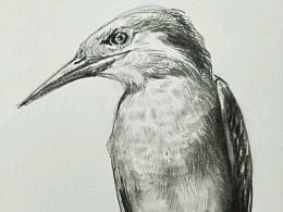 a bird(过程)