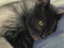 临摹作品:猫