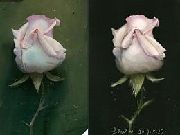 每日一画之玫瑰
