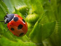 《昆虫记.壹》