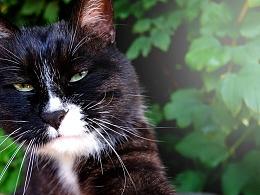 农展馆公园里的小猫
