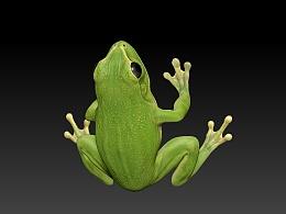 树蛙 青蛙 frog zbrush 3d模型
