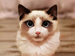 手绘布偶猫,含绘画步骤gif
