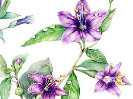 花卉练习册