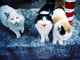 Onescat-克查原创作品【3】流浪猫专辑
