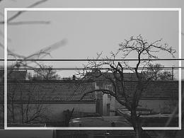 【框里框外】看着我长大的树,我探望他的次数越来越少了。