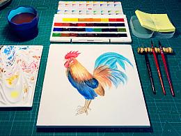 水彩习作·大公鸡