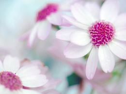 《妖精之花》_想·享摄影