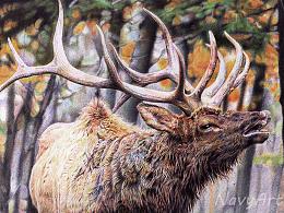 圆珠笔画《麋鹿》